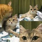 kisset4.jpg