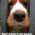 kopkop3.jpg