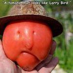 larry_bird.jpg