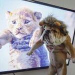 lionking_simba.jpg