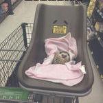 living_the_hedgehog_life.jpg
