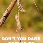 lizard_camaraderie.jpg