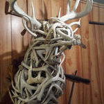 magnificent_sculpture_using_antlers.jpg