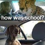 miten_meni_koulus.jpg