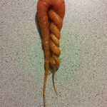 natures_twisted_humour.jpg