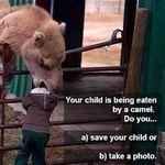 nice_camel.jpg