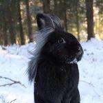 nice_hair_bunny.jpg