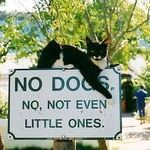 no_dogs_sign.jpg