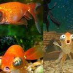 omg_fish.jpg