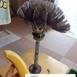 pelottava_banaani2.jpg