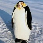 penguindog.jpg