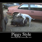 piggy_style_dog.png