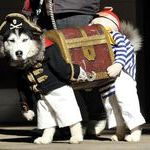 pirate_dog.jpg