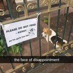 please_do_not_feed.jpg