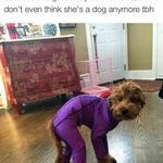poor_doge.jpg