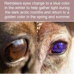 reindeers_eyes.jpg