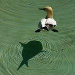 shark_bird.jpg