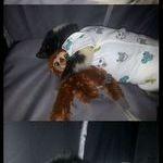 skunk_in_a_onesie.jpg
