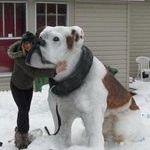 snowdoge3.jpg