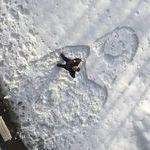 snowmonalisa.jpg