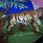 tigersleep.jpg