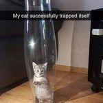 trap_.jpg
