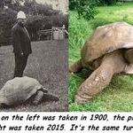 turtle_2.jpg