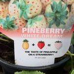 white_dream_pineberry.jpg