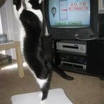 wii_fit_for_cats.jpg